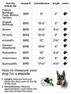 French Bulldog Growth Chart Boston Muzzle