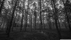 4k wallpaper black white forest black and white ultra hd desktop background