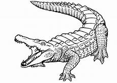 bild malvorlage krokodil 5 jpg 754 215 539 malvorlagen