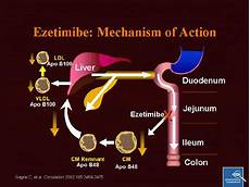 Statin Mechanism Of Action Pounding The Pavement High Cholesterol In A Runner