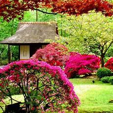 Flower Wallpaper Garden by Beautiful Flowers Garden Hd Wallpaper Hd Wallpapers