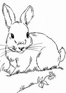 Ausmalbilder Tiere Ostern Pin Hase Windowcolor Vorlagen Pelautscom On