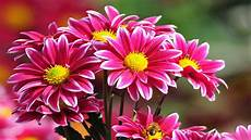 live flower wallpaper for desktop size beautiful flowers wallpapers for pc 2018 live