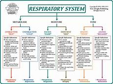 Biological Terrain Chart For The Respiratory System