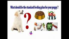 Labrador Puppy Food Chart India Puppy Food Plan In Hindi Youtube