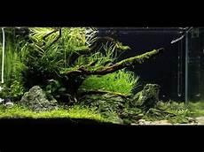 ada aquascape ada 90p quot rocky shore quot aquascape maintenance proscape