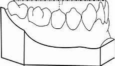 Curve Of Spee Measurement Of The Maximum Depth Of The Curve Of Spee