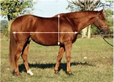 Healthy Horse Weight Chart Horse Weight Calculator Expert How To For English Riders
