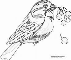 Malvorlage Vogel Kostenlos Vogel Gratis Ausmalbild