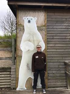 polar size chart how big is a polar bear polar bear size zooologist