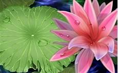 best flower desktop wallpaper lotus flower wallpapers wallpaper cave