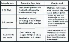 Labrador Puppy Food Chart India Complete Diet Plan For Labrador Puppies And Dogs In India