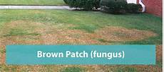 Brown Patch Fungus Brown Patch Fungus Florida S Eden Inc