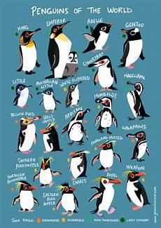 Types Of Penguins Chart Green Humour Penguins Of The World