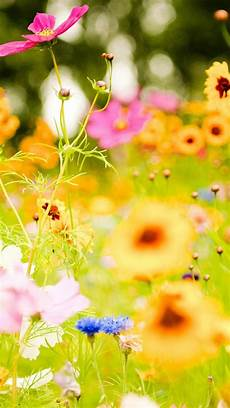 flower meadow iphone wallpaper flower pictures iphone 6 plus wallpaper 17025 flowers