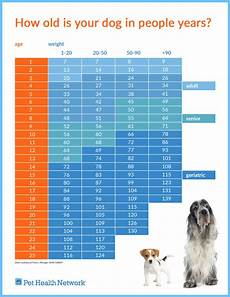 Puppy Age Chart How Old Is Your Dog In People Years