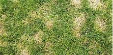 Brown Patch Grass How To Get Rid Of Brown Patches In Your Lawn