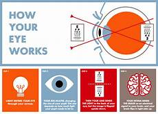 How Light Enters The Eye Parts Of The Eye Anatomy Amp How Eyes Work Lenscrafters