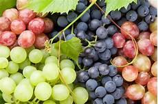 uva da tavola uva da tavola e uva da le differenze