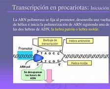 Image result for transcripci��n