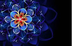 flower abstract 4k wallpaper flower 4k ultra hd wallpaper background image