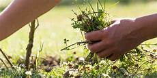 About Weeding Weeding Out Unworthiness Mindfulness Association