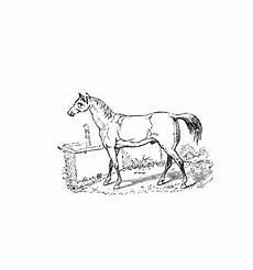 Malvorlage Blaues Pferd Pferde 00020 Gratis Malvorlage In Pferde Tiere Ausmalen