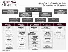 Department Of Agriculture Org Chart Organizational Chart Texas A Amp M Agrilife