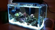 5 Gallon Tank Light 5 Gallon Nano Reef Quot Rimless Quot Youtube
