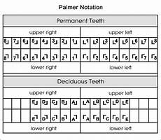 Dental Charting Systems Dental Charts To Help You Understand The Tooth Numbering