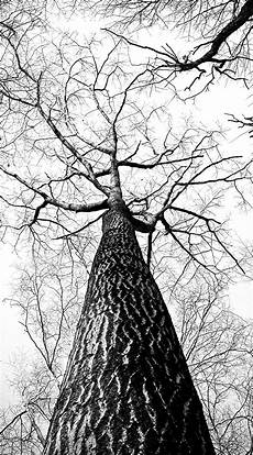 Wallpaper Iphone Black And White by White Background Wallpaper Iphone 72 Images