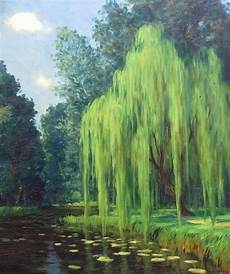 Tree Designs Tumblr Weeping Willow On Tumblr