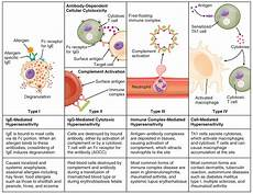 Hypersensitivity Reaction Hypersensitivity Allergy