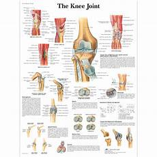 Anatomical Charts And Posters Anatomy Charts Arm And