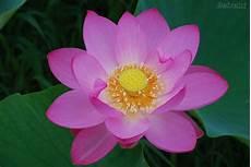 Flor De Lotus Blog Da Bere Flor De Lotus