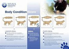 How Much To Feed A Cat Chart How Much Should I Feed My Cat Cat Weight Chart Pets