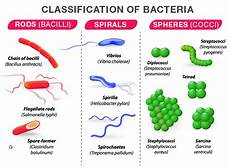 Classification Of Bacteria Chart Bacteria Structure Classification Reproduction And Its