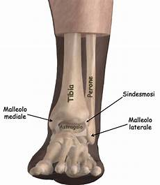 interno caviglia le fratture della caviglia