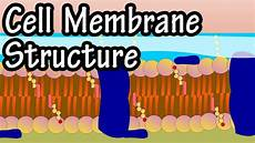 Membrane Structure And Function Cell Membrane Structure And Function Function Of Plasma