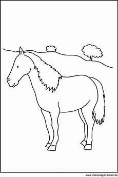 Malvorlage Pferd Gratis Pferde Bild Zum Ausdrucken Und Ausmalen