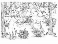 Ausmalbilder Erwachsene Wald Erwachsenen Coloring Seite Hirsch Woodland Wald Rotwild In