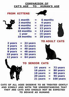 Baby Kitten Age Chart Et 224 Dei Gatti Cat Ages Cats Cat Age Chart