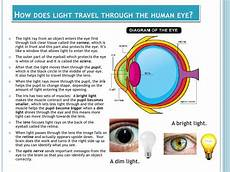 How Light Enters The Eye Light And The Human Eye 2012