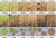 Pea Plant Growth Chart A Visual Guide To Key Stages In The Growth And Maturity Of