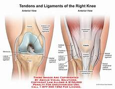 Knees Ligaments And Tendons 14102 04b Tendons And Ligaments Of The Right Knee
