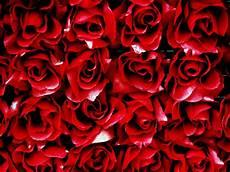 39 bed of roses wallpaper on wallpapersafari