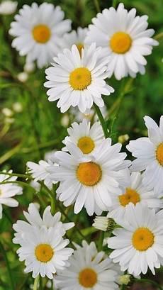 Flower Wallpaper Loading by Flowers Wallpaper