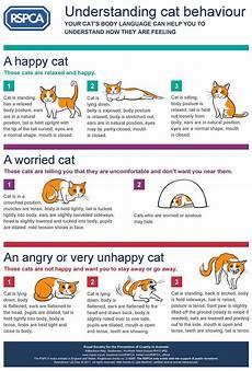 Cat Behavior Chart Understanding Cat Behaviour Behaviour Cats
