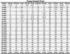 Teacup Poodle Weight Chart Puppy Weight Chart For Yorkies Puppy Growth Chart
