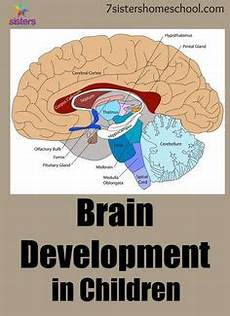 Whole Brain Child Ages And Stages Chart Child Development 101 Meeting Milestones Nashville